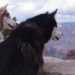 Flood and Mocha at the Grand Canyon086