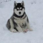 Jasmine in the snow